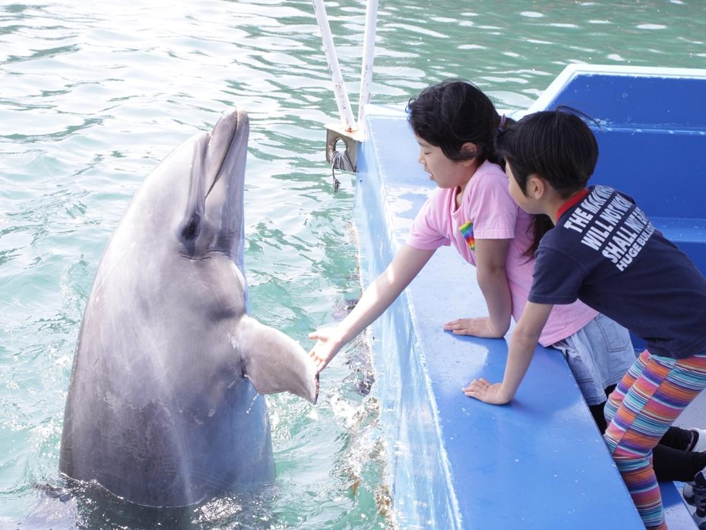 イルカと遊ぼう!