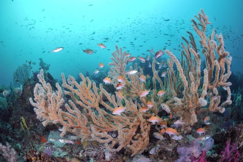 「伊豆海洋公園 ダイビング」の画像検索結果